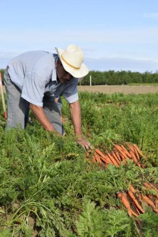 Medidas urgentes en materia de empleo agrario por el COVID19